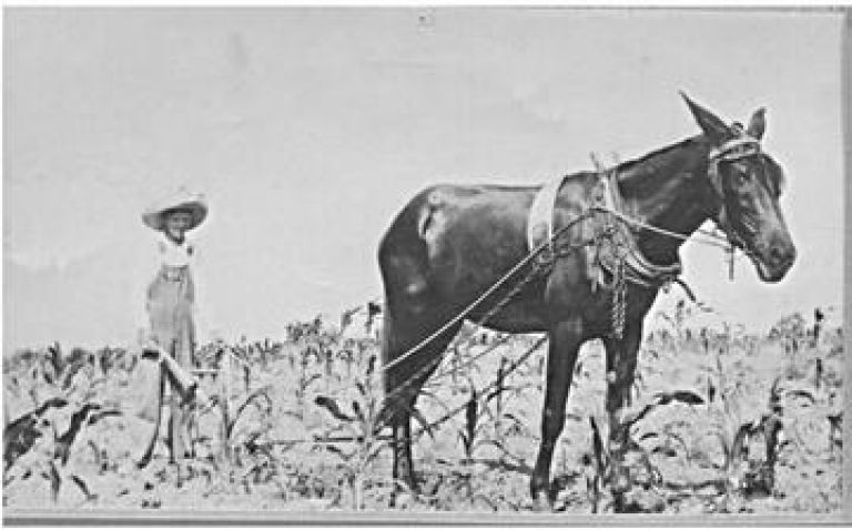Sears History Photo. Picture of plow horse and farmer.
